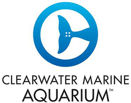 Clearwater Aquarium Promo Codes: Up to 50% off